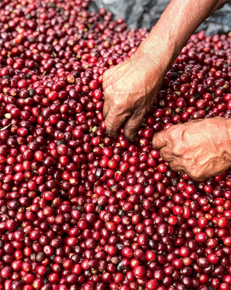 Coffee: From Seed to Cup